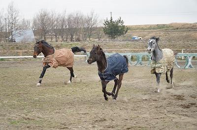 健康な乗馬は健康な馬から