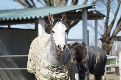 馬はおしゃべり