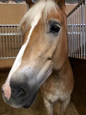 人に応えてくれる馬を育てることが大切