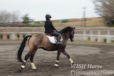 馬と一緒に駈ける乗馬