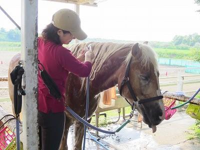 馬と遊ぼう!