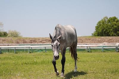 のんびり愛情で育った乗馬