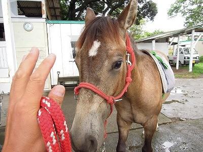 馬の調教成長記録