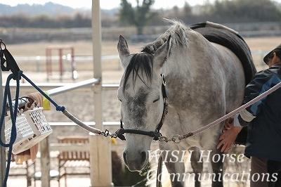 幸せそうな馬