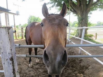 馬の表情はわかりやすい