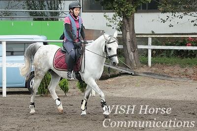 馬とシンクロする乗馬