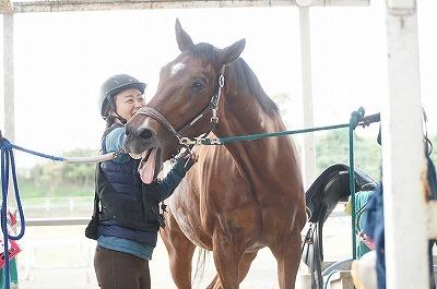 仲が良い馬と人の美しい風景