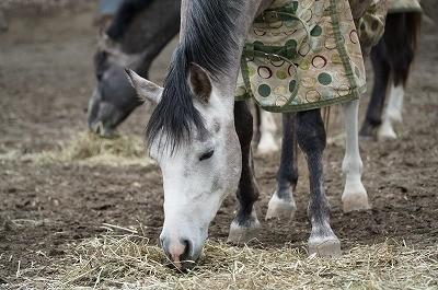 美味しそうに食べる馬たち