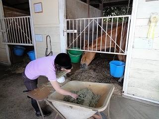 馬にえさやり体験