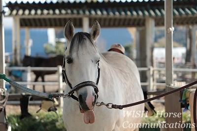馬の喜ぶ声が聞こえる