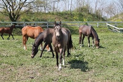 質の良い馬、安心な乗馬