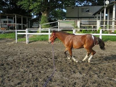 新馬調教 駈歩の調教