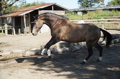 馬が私の魂