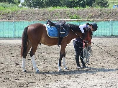 新馬調教 馬を立てる