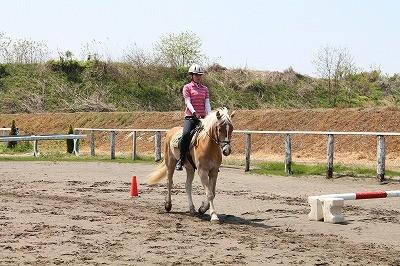 乗馬体験ハミ受けや移行の練習