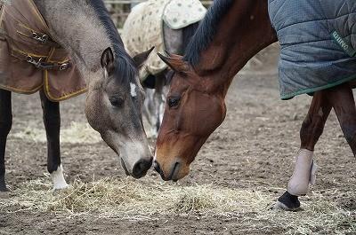 仲良しの馬たち