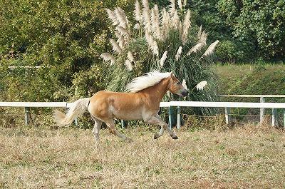 馬を幸せにするのが好き