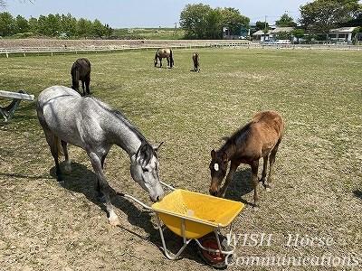 知的な乗馬
