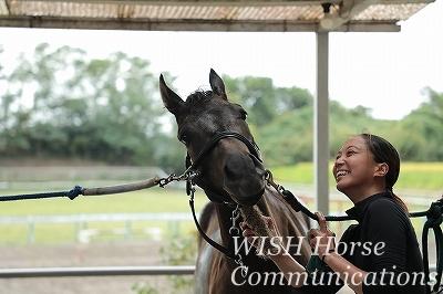 馬と心がつながる乗馬