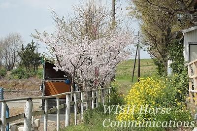 桜乗馬クラブ