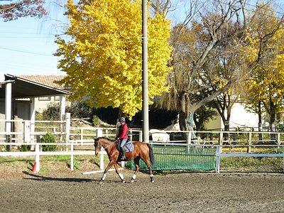 美しい馬と優しい乗り方