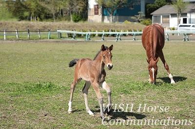 乗馬と馬の心