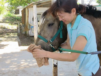 馬と仲良しになる