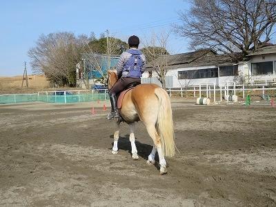 優しい馬たちに囲まれて