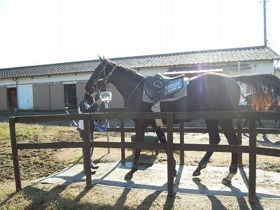 馬の体重計