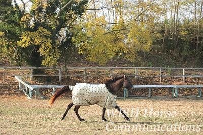 紅葉をかける乗馬
