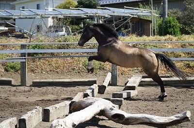 生き生きとした馬の飛越