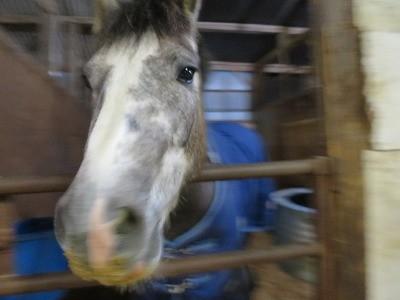 馬の満足げな表情