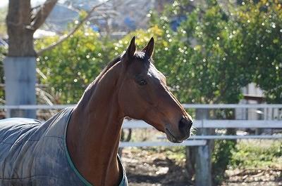 馬の美しい姿