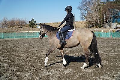 馬を快で動かす、馬に信頼される乗馬