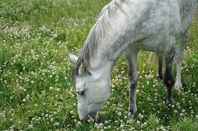 馬のためにできること