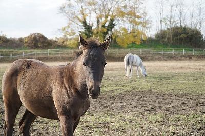 馬のことをたくさん知ろう