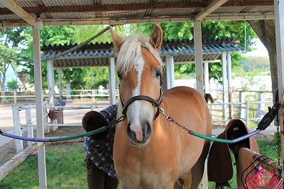 キラキラの馬達