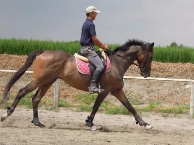 乗馬では一歩ごとに脚を使うべきか