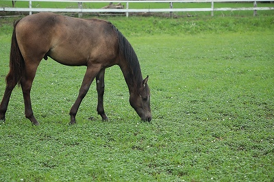 のびのび育つ子馬