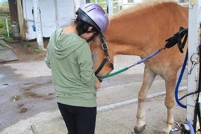 動物が好き体験乗馬