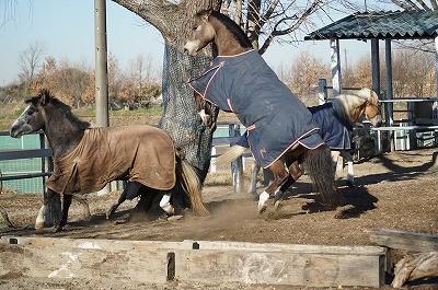 起き上がった馬