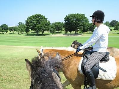 馬が馬に教える