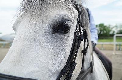 馬の目を見ればいろいろわかる