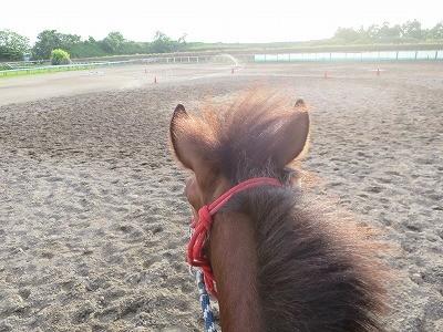 新馬調教 自発性を育てる