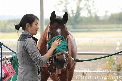 馬に喜んでもらう手入れ