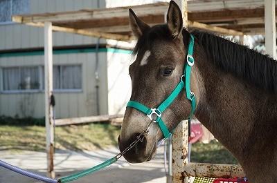 馬の優しい表情