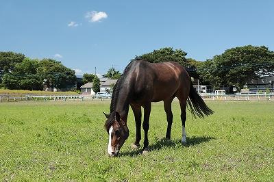 馬を幸せにするために
