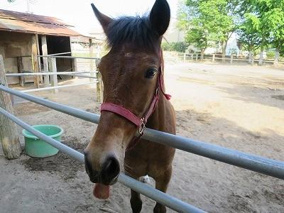 新馬調教 馬の言葉