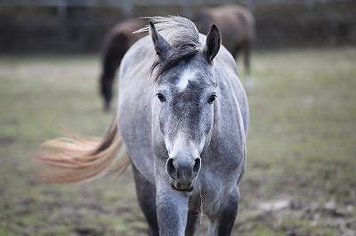 馬の信頼の視線