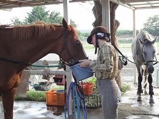 馬と仲良くみんな仲良く
